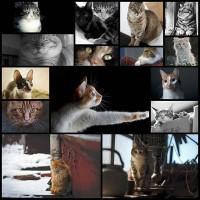 adorable-cat-photos15