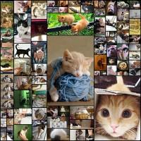 cats78