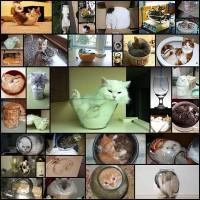 liquid-cat35