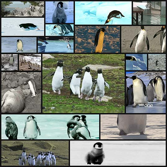 penguins-that-are-more-awkward-than-you21