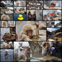 there-is-a-hot-springs-in-japan-where-monkeys-relax-all-day20