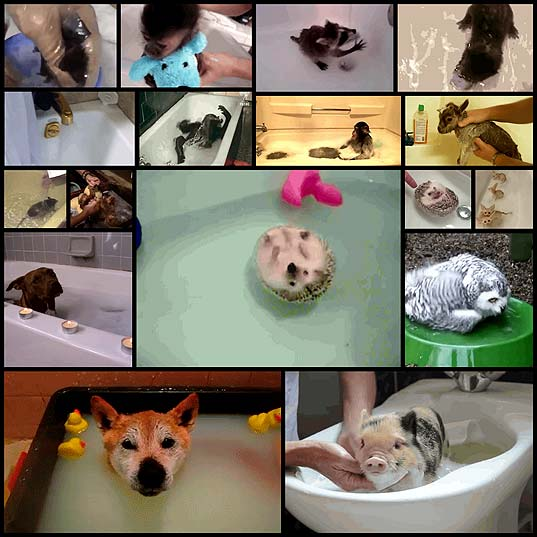 which-animals-are-happiest-about-bathtime16