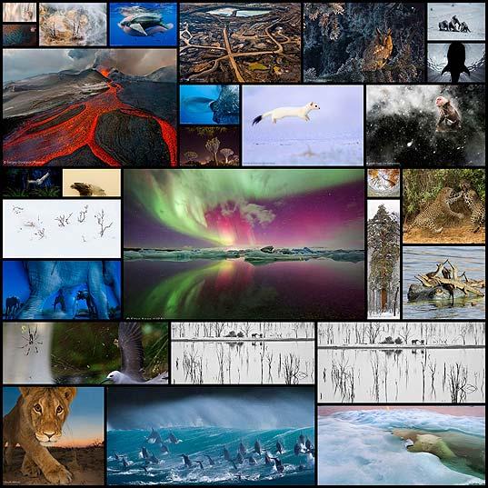 winners-of-the-wildlife-photographer28