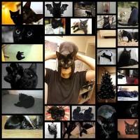 black_cats27