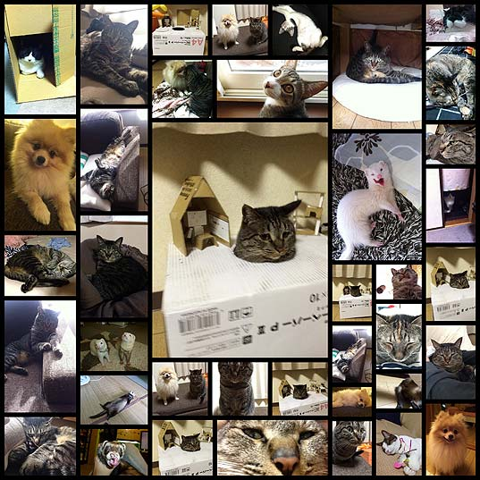 cat_cardboard_box39