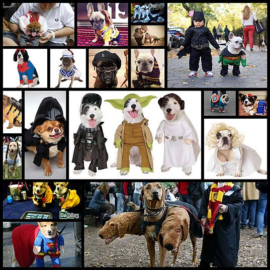 dogs-in-movie-star-halloween-costumes19