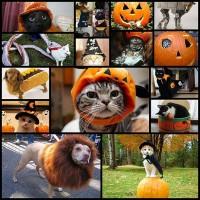 halloween_cats15