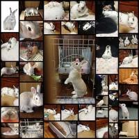 rabbit40