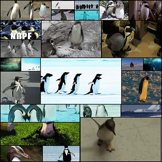 reasons-that-penguins22