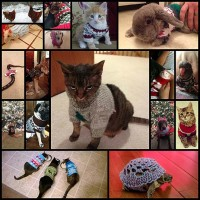 17-animals-who-look-more-fab-in-their-christmas-sweaters-tha