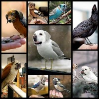 dirds-the-dog-birds9