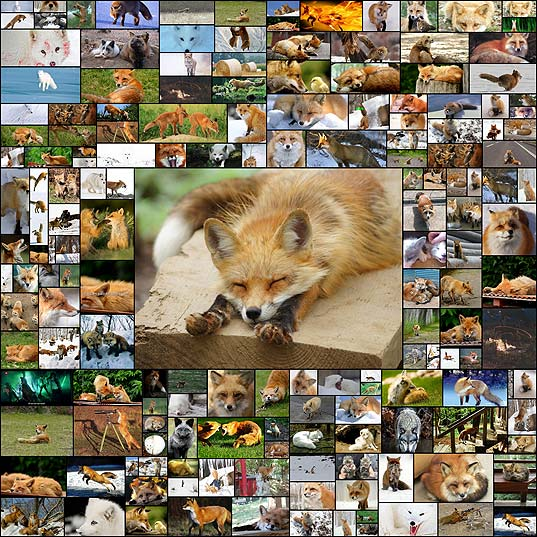 fox170