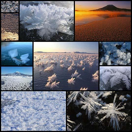 frost-flower11