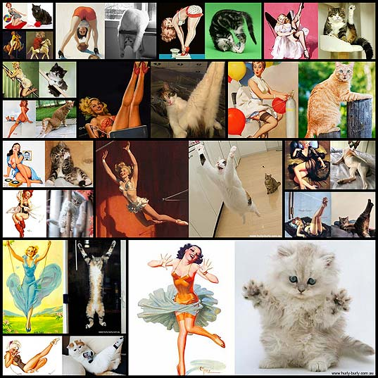 funny-cats-that-look-like-pin-up-girls17