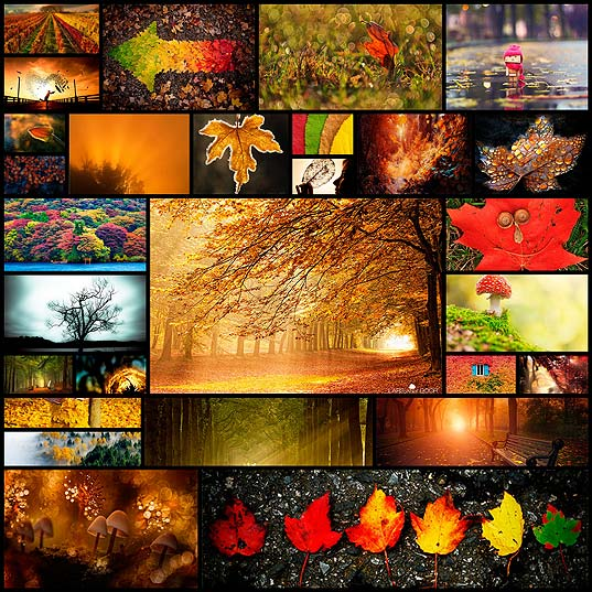 goodbye-autumn-vibrant-silhouettes-of-fall28