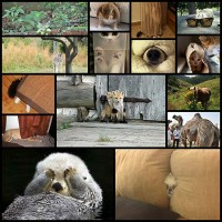 15-animals-that-are-terrible-hiders-but-dont-tell-cn3l