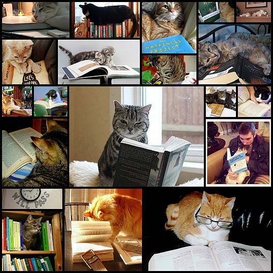 cats-who-are-secretly-excellent-readers20