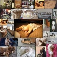 funny-sleeping-cats30