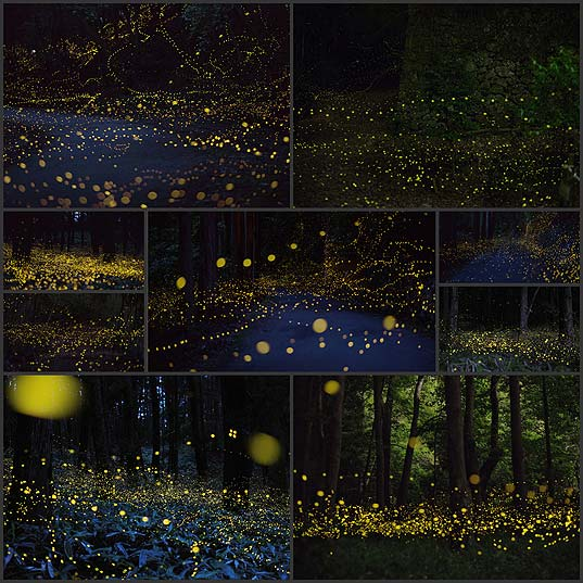 long-exposure-photos-of-fireflies-at-night-tsuneaki-hiramatsu9