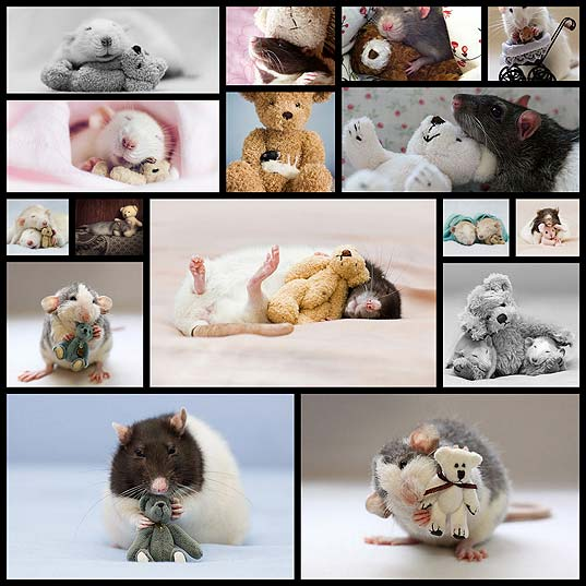 rats-teddy-bears-ellen-van-deelen-jessica-florence16