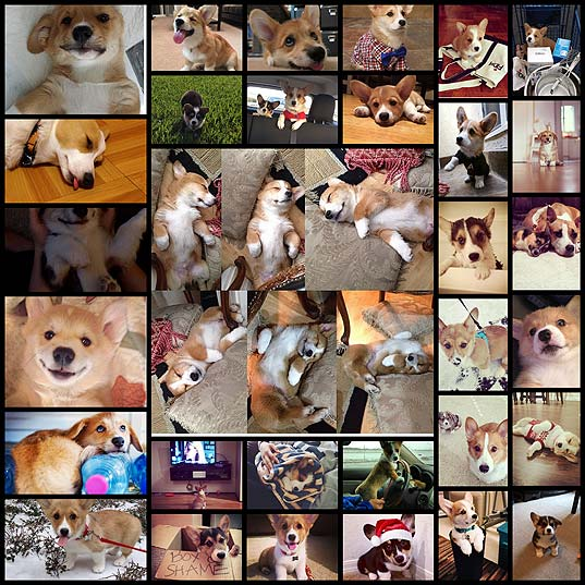 the-25-cutest-corgi-puppies-currently-online