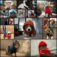 these-animal-are-staying-warm-18-photos