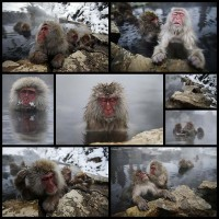 these-snow-monkeys-keeping-warm-in-a-hot-spring-are-very-hap8