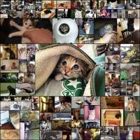 「外国人が自慢の『可愛い子猫』の画像を貼っていくスレ」海外のまとめ80