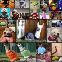 21-animals-wearing-sweaters