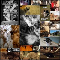 23-conversations-every-cat-owner-has-had-with-thei-fxd2