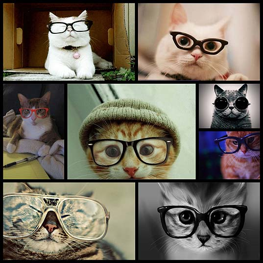 adorable-cats-wearing-hipster-glasses8