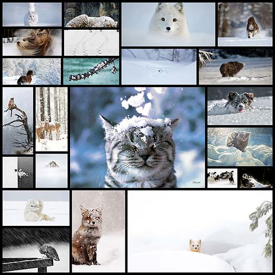 animals-looking-adorable-in-the-snow-23-pics
