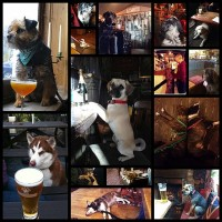 definitive-proof-that-dogs-in-pubs-are-the-best-thing-ever15