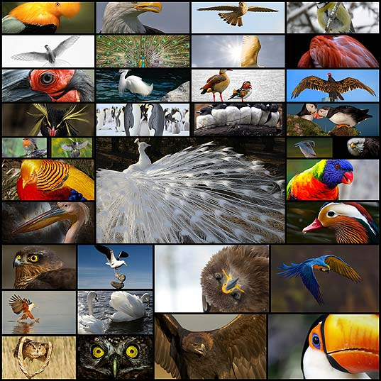 its-a-wild-world-outstanding-photographs-of-birds35
