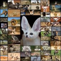 adorably-badass-desert-animals12-56