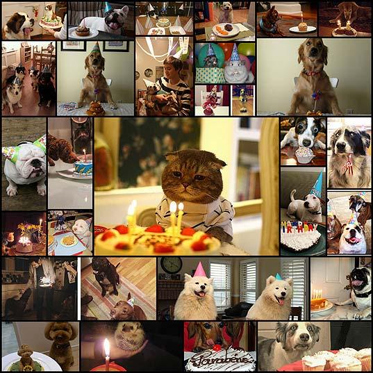 animals-celebrating-their-birthdays-29-photos