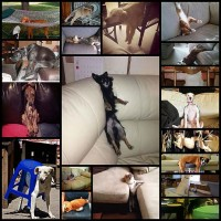 animals-who-cannot-figure-out-how-furniture-works-18-photos
