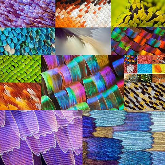 butterfly-wing-macro-photography-linden-gledhill15