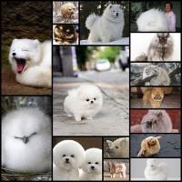cute-fluffy-animals16