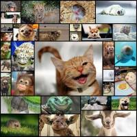 cute-smiling-animals30