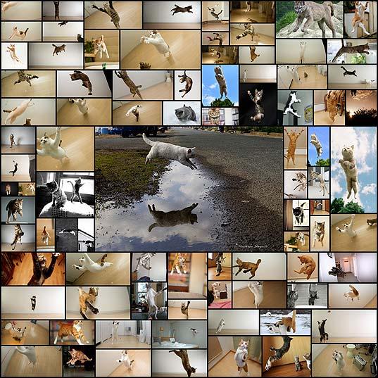 躍動感あふれる猫が飛んでいる画像88