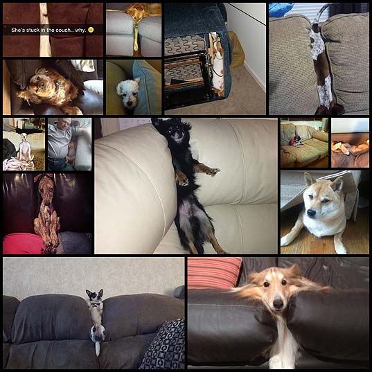 dogs-stuck-in-couches17