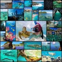 free-diving30