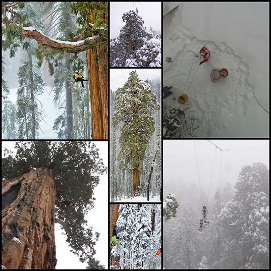 how-to-make-a-photo-of-a-giant-tree-7-pics