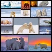 magnificent-photograph-of-polar-bear14