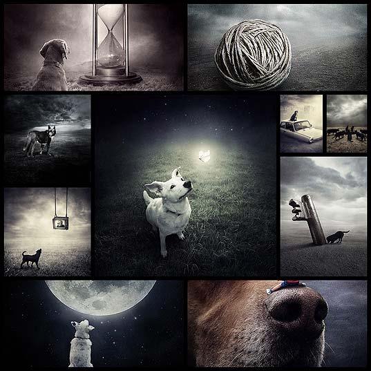 surreal-photography-shelter-pets-sarolta-ban10
