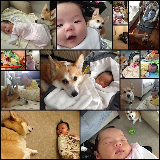 this-corgi-and-this-baby-are-bffs-and-it-is-everything14