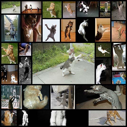 躍動感あふれる猫30