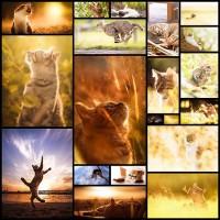 cat_lover20