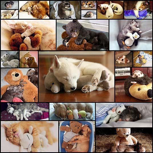 cute-animals-sleeping-cuddling-stuffed-toys25